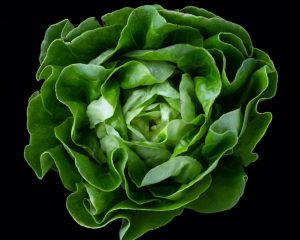 How to Grow Lettuce, From Butterhead to Cos