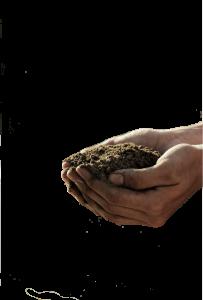 Gardening hands holding compost