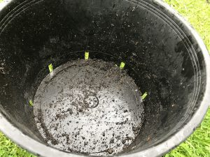 Drainage holes in 25 litre container.