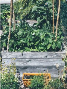 Raised Beds Can Grow Intensive Crops - More gardening myths?