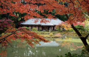 Red leaves and lake in garden