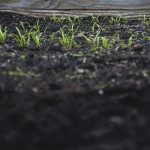 Garden Soils: An Article Series Answering Your Soil Questions
