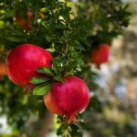 How To Grow Exotic & Unusual Fruit in the UK