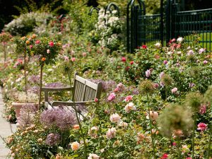 Garden Design using roses and a simple bench
