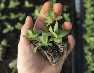 Module grown plants