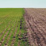 Soil Carbon, Organic Matter & Nitrogen Balance