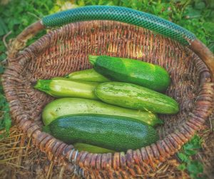 What's the difference between a courgette and marrow?