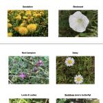 Gardening For Kids: Weed Identification Chart & Activities
